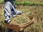 How the world can learn from Indonesia's microfinance scene
