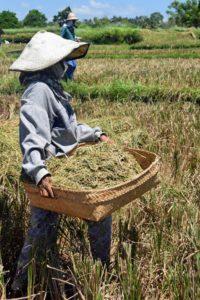 microfinance indonesia